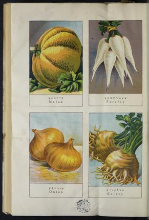 Old book page with vegetable imagery and captions